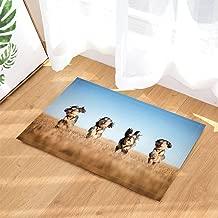 Animals Bath Rugs, Funny Schnauzer Dog Run In Prairie Pet Theme Printing, Non-Slip Doormat Floor Entryways Indoor Front Door Mat, Kids Bath Mat, 15.7x23.6in, Bathroom Accessories