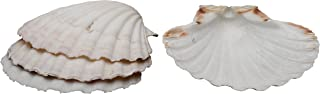 Best giant sea clam shells for sale Reviews