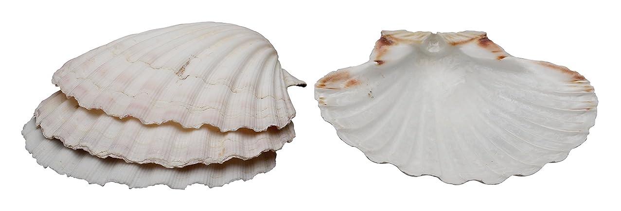HIC Natural Baking Shells, 4-Inches, Set of 4