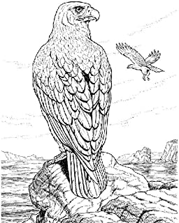 Wild Life Coloring Book