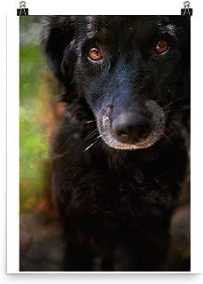 Cane Arte Foto Regali Per Gli Amanti Dei Cani, Poster Stampe Su Tela Varie Dimensioni, Cane Arte Decorazione Della Parete,...