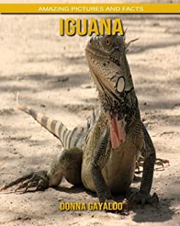 Iguana: Amazing Pictures and Facts