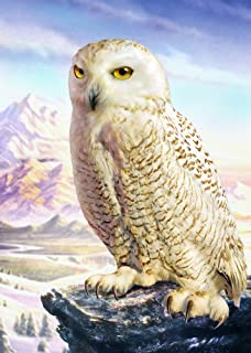 Posterazzi Barn Owl Poster Print by Adrian Chesterman (18 x 24)