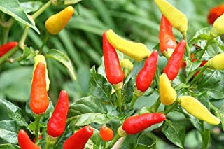Best hot pepper plants for sale Reviews