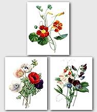 Set of 3 Botanical Prints, Red Tropaeolum, Poppy, Sweet Pea Flowers, 8 x 10 Inches, Unframed