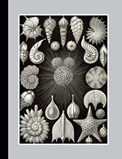 Vintage botanical illustration Journal: Ernst Haeckel - Thalamphora seashells - The large botanical journal for the marine...