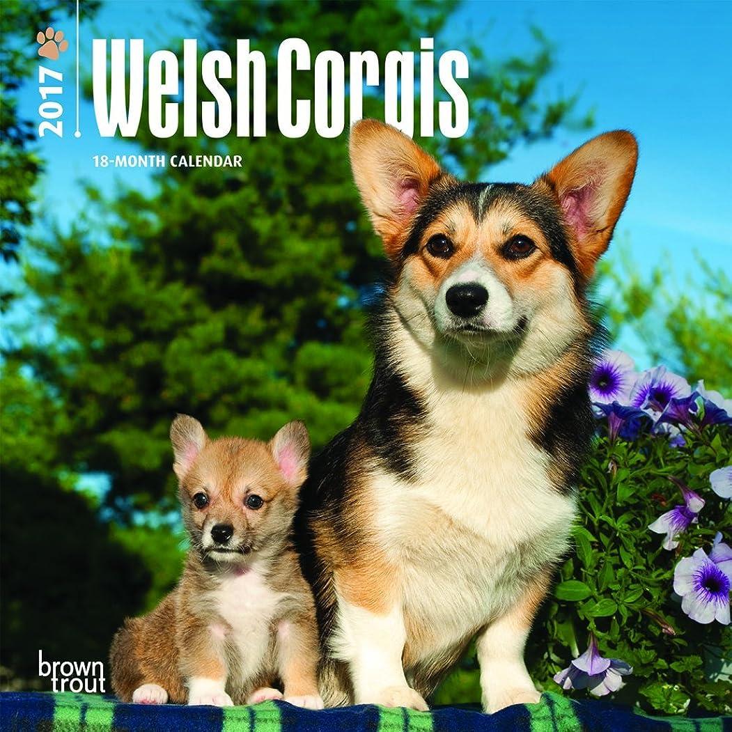 押し下げる明示的に銃Welsh Corgis 2017 Calendar