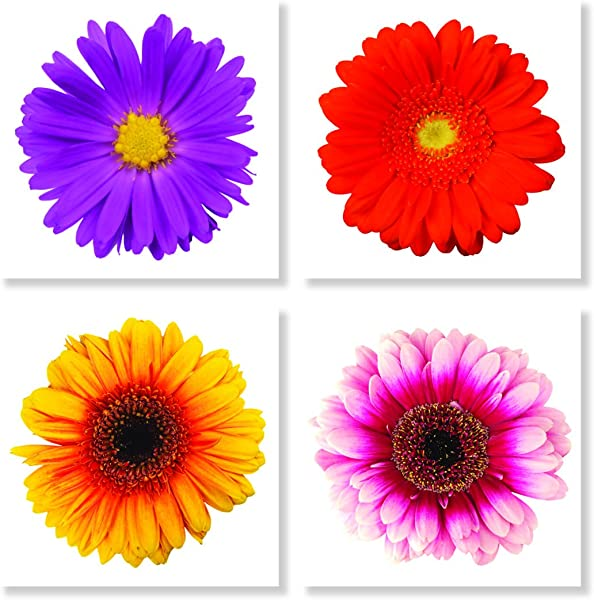 Vibrant Gerber Daisies 4 X 4 Inch Tabletop Coasters Gift Boxed Set Of 4
