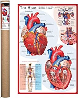 EuroGraphics The Heart Poster, 36 x 24 inch
