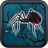 Spiderweb Trot Marathons