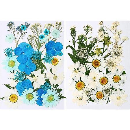 71 Pièces Ensemble de Fleurs Feuilles Séchées Pressées Naturelles Pétales Blanches Bleues Fleurs de Marguerite Séchées Réelles Décoratives Mixtes pour DIY Résine Bougie