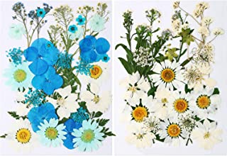 Outus 71 Pieces Natural Dried Flowers Set Real Pressed Flowers Leaves Petals White Blue Daisy Pressed Flowers Mixed Decora...