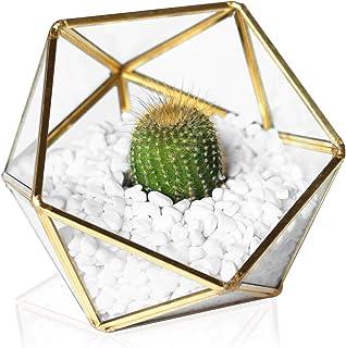 MOCTUS Glass Geometric Terrarium - Succulent Planter - Clear Box for Garden/Outdoor/Indoor/Home Decoration, Wedding Gift, ...