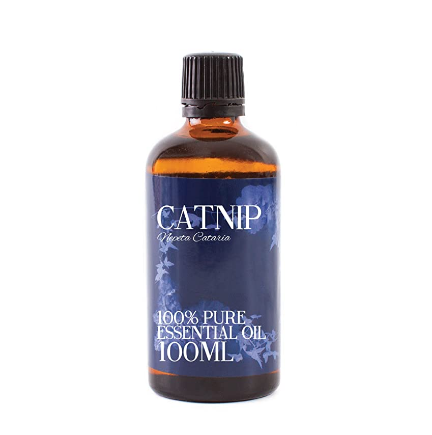 インタラクション市区町村脈拍Mystic Moments | Catnip Essential Oil - 100ml - 100% Pure
