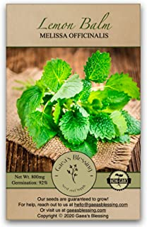 Gaea's Blessing Seeds - Lemon Balm Seeds 1000+ Seeds Net Wt. 800mg Non-GMO 92% Germination Rate Melissa Officinalis