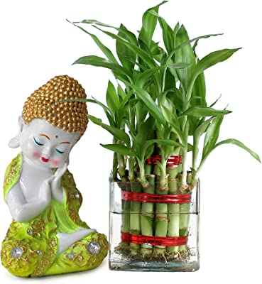TIED RIBBONS Bamboo Plant with Glass Pot and Buddha Showpiece Figurine for Home Living Room Bedroom Decoration