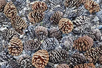 CA, Fallen Jeffrey Pine Cones in Sierra Nevada - Fine Art Print on Canvas Wall Art Decor for Home Living Room,Bedroom,Bathroom 36 x 23 Inch Wall Art Painting Canvas Print ONLY -NO Frame