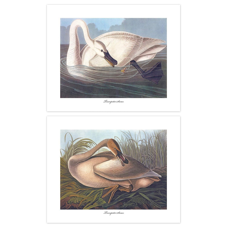 Swan Art Max 46% OFF Audubon Bird Prints Max 59% OFF Coastal Lake House Decor Se Artwork