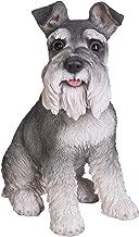 Grey Schnauzer