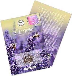 900x semillas de lavanda con alta tasa de germinación - Planta medicinal versátil e ideal para abejas y mariposas (incl. L...