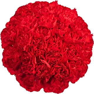 red carnations delivery