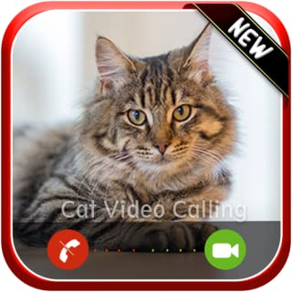 Instant Live Video Voice Call From Cat - Free Fake Phone Caller ID PRO 2019 - PRANK FOR KIDS