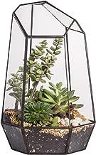 9.8inches Height Indoor Tabletop Irregular Glass Geometric Air Plants Terrarium Box Desktop Display Planter Succulent Holder Flower Pot for Fern Moss DIY