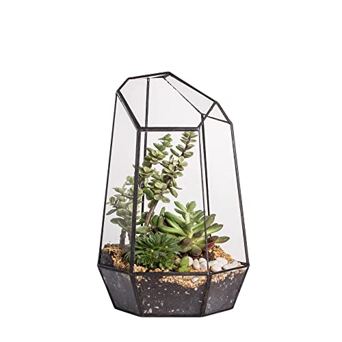 Venus Fly Trap Terrarium Amazon Com