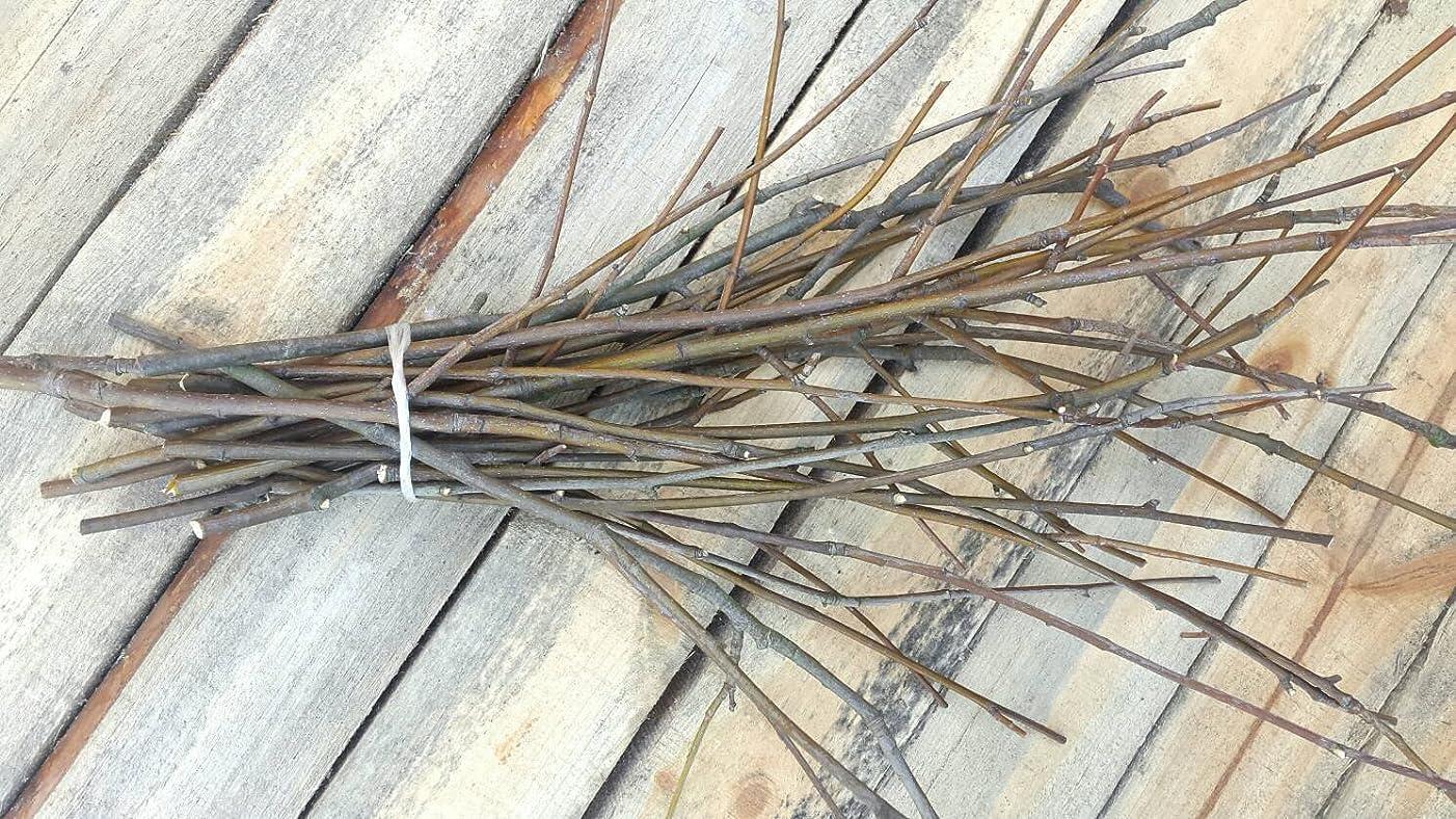 25 Rowan Wood Twigs. Rowan Sticks. Decorative Rowan Branches Bundle. Rustic Home Decor. Rowan Twigs. Home Protective Branches.