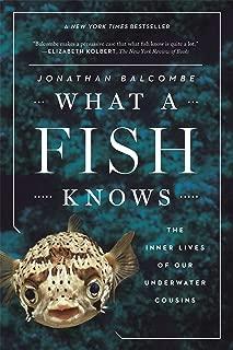 Best see fish underwater Reviews