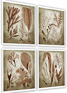Gnosis Picture Archive Sepia Seaweed Botanical Decor Set of 4 Unframed Art Prints Marine Plants Sepia 4A1234
