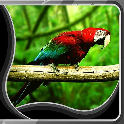 Imágenes de Parrot Live