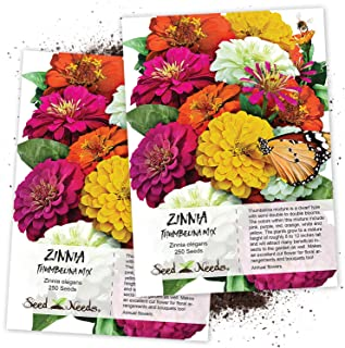 Seed Needs, Thumbelina Zinnia Mixture (Zinnia elegans) Twin Pack of 250 Seeds Each