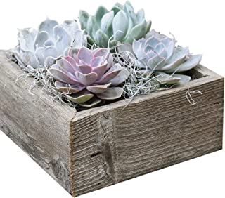 Colorful Succulent Garden in Reclaimed Wood Succulent Planter - 8.5
