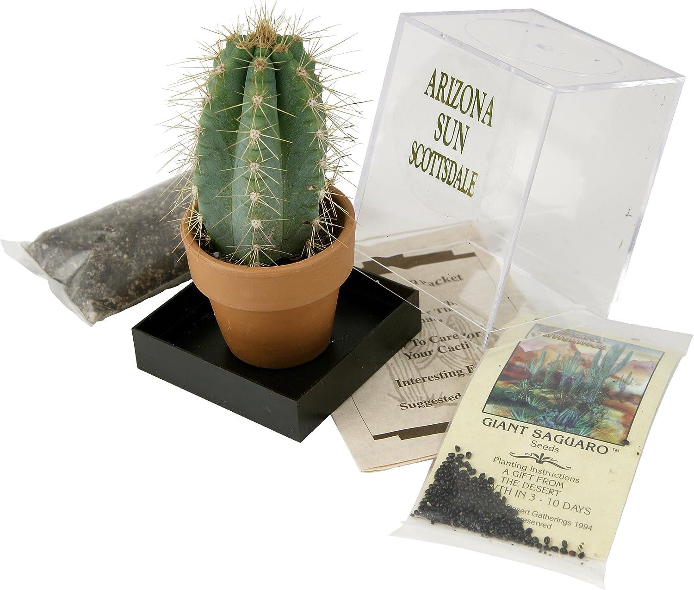 Grow Your own Saguaro Cactus Kit – Incubator – Cactus Seeds – Southwest Arizona Southwestern Gift Idea - Seed Propagation - Desert Souvenir
