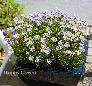 felicia amelloides blue