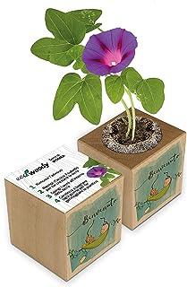 Eco-Woody   Regalo ecologico e sostenibile Nascita Bambino   Cubo di legno magnetico con semi di Ipomea   Kit per la colti...
