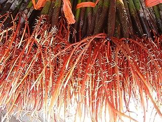 AQUACULTURE NURSERY FARMS Mangrove Tree Seedlings 12