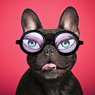 Magnet & Steel 6793 French Bulldog with Glasses Greetings Card