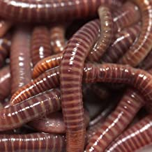 Remember the Worms?