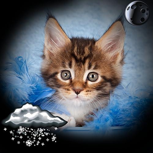Kätzchen Uhr Wetter Widget