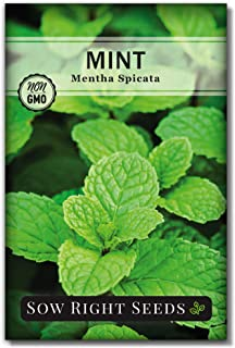 بذرهای مناسب بکارید - بذر نعناع برای کاشت - بذرهای گل مروارید غیر GMO - دستورالعمل های کاشت و پرورش باغ چای گیاهی ، داخل یا خارج هدیه بزرگ باغبانی (1)