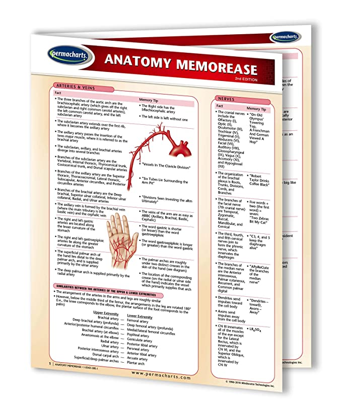 Anatomy MemorEase Guide - Medical Nursing Quick Reference Guide by Permacharts