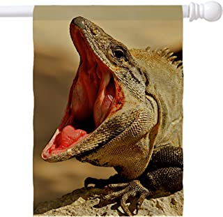 MSD House Flag Double Sided, Large 28X40 Garden Flag, Durable Polyester Fabric Home Flag, Indoor and Outdoor Decoration, Machine Washable Custom Available Image ID Iguana with Mouth Wide Open Photo