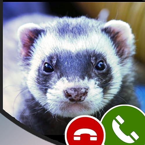 Fake call from Ferret-Free Prank