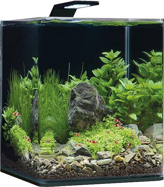 Garnelen-Aquarium