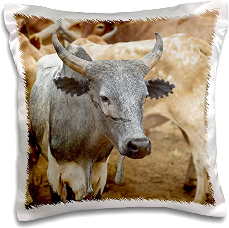 Amazon Com 3drose Danita Delimont Cattle Ethiopia Hamer Tribe Cattle With Distinctive Markings As Brands 16x16 Inch Pillow Case Pc 310405 1 Kitchen Dining