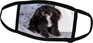 3dRose Face Cover Medium, Black and white Toy Poodle
