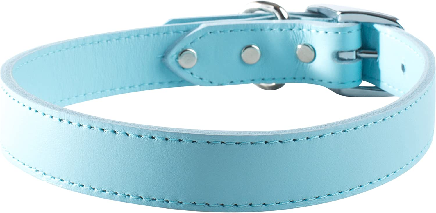 OmniPet 6066BBL12 Signature Leather Pet Collar, Baby bluee, 1 2 by 12