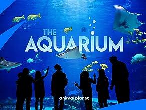 The Aquarium Season 1